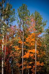 Alabama Autumn I