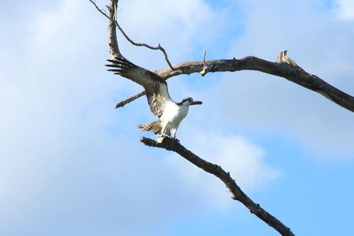 Everglades National Park 12-1-07 160