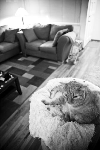 Baobao in Comfort