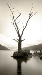 Tarbet Tree, Loch Lomond