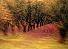 Into the Trees (justb) Tags: trees motion blur tree colors digital moving nikon colorful bc d70s hazelnut agassiz justb