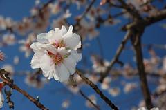 February White (fe64970103) Tags: blue white nature spring nikon february d40