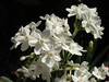 BJ461 Duke Gardens (listentoreason) Tags: usa white color america newjersey unitedstates scenic favorites places olympus greenhouse uncertain dukegardens score30 olympusc4040z c4040z