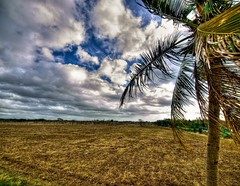 onepalm (echav) Tags: sky tree clouds dominican republic olympus palm hdr lightroom zd 714mm platinumphoto