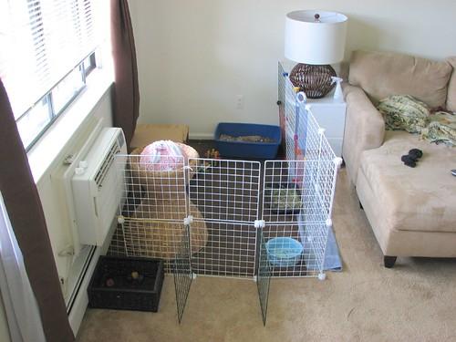bunny prison 2 - door closed