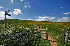 Coastal Path - Walk the Wight #6