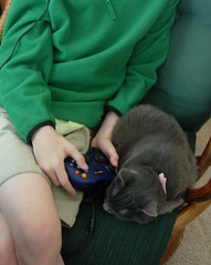 Unsuspecting Cat and the Video Game
