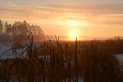 The golden hour (balu51) Tags: morgenspaziergang morgen sonnenaufgang sonne himmel wolken landschaft hügel schilf gelb orange grau winter wintermorgen landscape hill field reed morning wintermorning sunrise sun sky clouds mist golden goldenhour yellow grey februar 2017 copyrightbybalu51