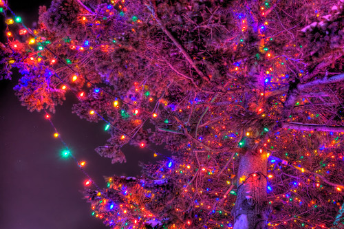 Lights and the Purple Tree