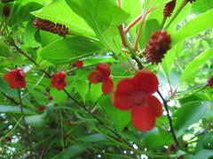 herbal skin remedy
