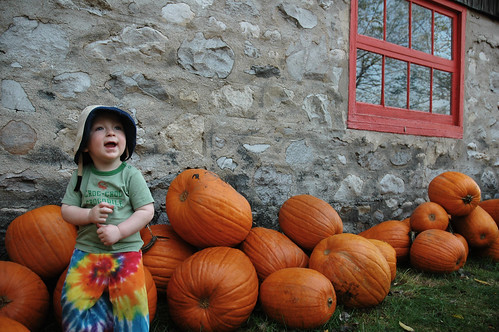 more-pumpkins-089