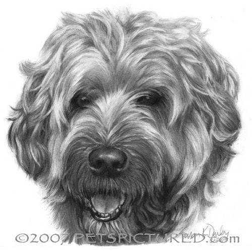 Memorial Portrait of Bailey, Soft-Coated Wheaten Terrier