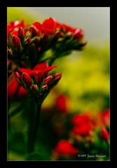 Red on Yellow (skinr) Tags: flowers red flower macro yellow unitedstates buds skinr wwwjskinnerphotocom