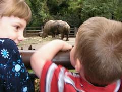 Nathan at the zoo