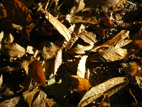 autumn ˜ autunno