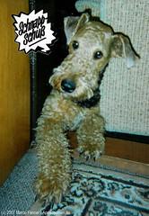 Ninette - 005 (appadaumen_de) Tags: terrier hund freund airedale niedlich herzig wauwau s airdale treu putzig brav lieb hundi hundchen hndchen spielkamerad kauknochen rdail rdl erdeel spielpartner erdhl
