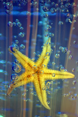 Starfish.... (scatoz) Tags: blue stella italy mer water yellow de star italia starfish harmony stern estrella toile seestern estrellademar stellamarina supershot top20colorpix castelvolturno 35faves aplusphoto top20yellow colourartaward top20everlasting scatoz thebestofgodscreation maluchiffaritime fdream exquisiteimage saariysqualitypictures