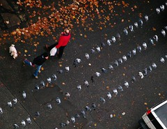 Pigeons (Mike Ambach) Tags: city urban bird fall vancouver pigeons cbcradio3 flickraward cbcradio3imageoftheday 1galleries