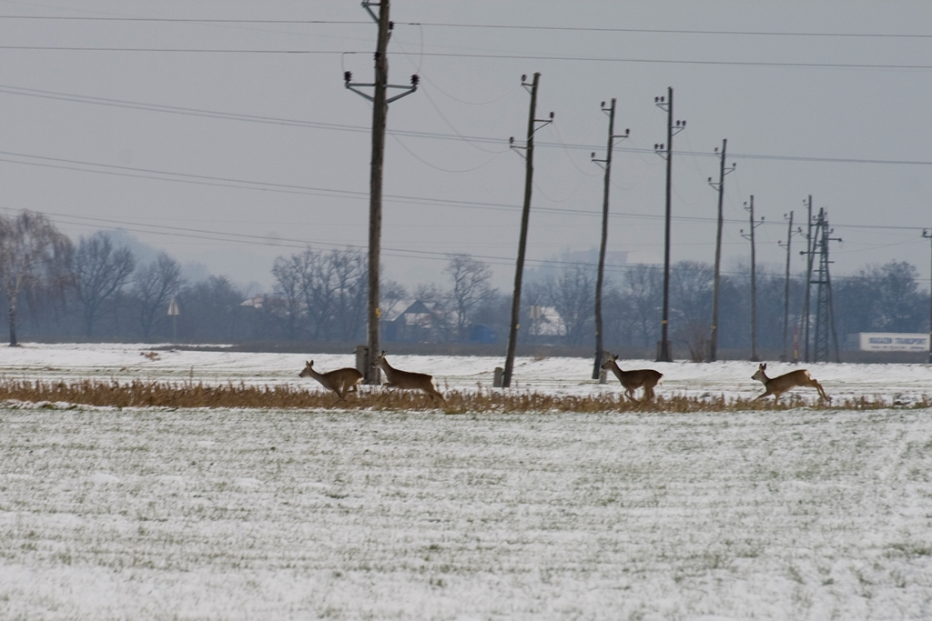 Chasing deers-3
