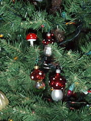 Amanita growing in the tree (d o d g e r) Tags: christmastree muscaria aminita