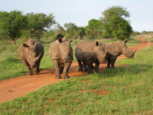 140-rhino-02