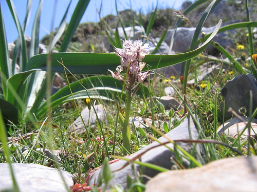 orchid among rocks