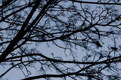 ryoku_de_5345 (ashesmonroe) Tags: wood trees winter wild sky detail nature leaves forest badenwürttemberg badenwrttemberg