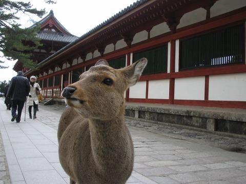 鹿のいる風景-大仏殿前
