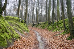 Hollow Path (just.Luc) Tags: wood trees sky brown tree green nature water leaves rain dead leaf moss spring woods mood branch belgium belgique branches belgië running trunk gaia belgica motherearth belgien vlaamsbrabant oudheverlee