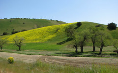 The Hills Are Alive! (Dally) Tags: trees yellow hills wildflowers incrediblenature absolutelystunningscapes