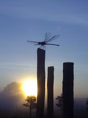 Dragonfly (sorgun68) Tags: sky sun nature sunrise australia views phillipisland kartpostal alemdagqualityonlyclub