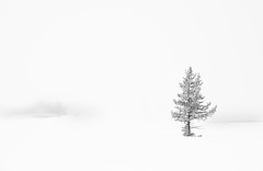White Out (Frederick Van Johnson) Tags: show park travel wild podcast tree nature yellow fog stone america landscape outdoors photography this nikon scenery montana natural outdoor wildlife north johnson scenic may overcast idaho national yellowstonenationalpark week yellowstone wyoming wilderness van 2009 d3 frederick thisweekinphotography frederickvanjohnson