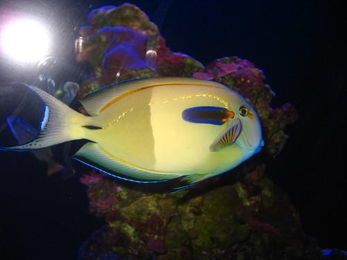 flash and fish
