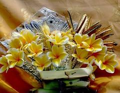 Hindu offering with Plumeria flowers . (Franc Le Blanc .) Tags: flowers bali lumix plumeria panasonic hindu denpasar canang
