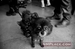 Folsom Street Fair 2007 (weird.witch80) Tags: sanfrancisco dog leather fetish folsom bdsm kinky folsomstreetfair folsomstreet folsomstreetfair2007 folsom2007