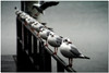 (Lee_Bryan) Tags: white black nature canon eos dof seagull zurich blueribbonwinner supershot 400d superaplus aplusphoto infinestyle diamondclassphotographer flickrdiamond theunforgettablepictures fiveflickrfavs goldstaraward tup2 aphotocontest31 alemdagqualityonlyclub alemdaggoldenaward alemdag1winnerinrepetitioncontest