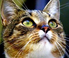 Gustav The Cat (Ula P till 2016 :)) Tags: cat perfect photographer the naturesfinest flickrsbest 25faves bestofcats anawesomeshot colourartaward
