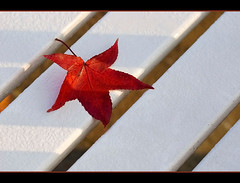 resting leaf (Sabinche) Tags: autumn fall bench leaf sabinche mywinners abigfave flickrplatinum thegoldenmermaid