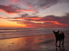 Nico viendo el atardecer (Keep the Funk alive) Tags: sunset sol beach contraluz atardecer spain sombra playa perro nico puesta orilla mazagon ltytr1 mailciler retofs1 retofs2 retofs3