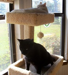 Cat tree with cats