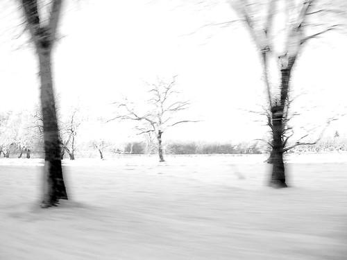 fast trees 2