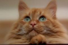 118118118 (gyakusan_reido) Tags: cats cat neko nya