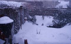 backyard under snow