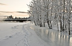 Robert Campbell Bridge (eyebex) Tags: trees winter snow cold reflection ice delete10 frozen saveme5 snowy deleteme10 footprints save8 save9 save10 savedbythedeltemeuncensoredgroup whitehorse overflow yukonriver riverdalebridge lewesboulevard robertcampbellbridge