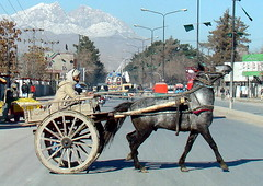 Traffic in Quetta. (Commoner28th) Tags: road street winter pakistan people horse snow afghanistan mountains travelling tourism wheel traffic iran transport culture hills ahmed bolan chaman csa agha quetta waseem commoner sibi pashtun baluchistan jalalspagespakistan kommoner commoner28th gettyimagesmiddleeast