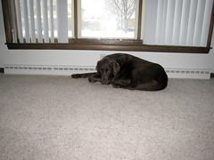 Dakota resting in front of HER heating vent