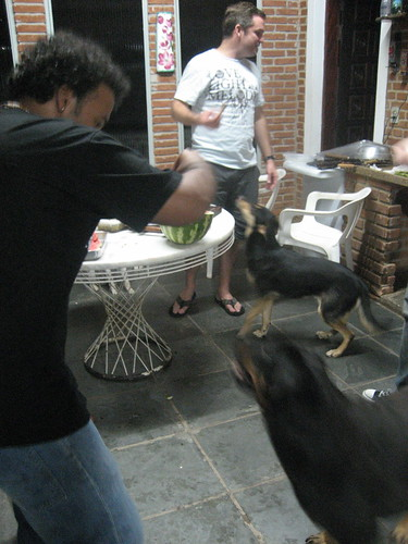sneaking the puppies some food