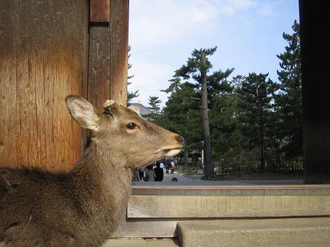 鹿のいる風景-南大門にて