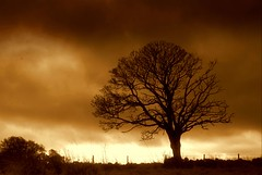 Naturellement (Nicolas Valentin) Tags: tree sepia scotland naturesfinest anawesomeshot aplusphoto 1nv