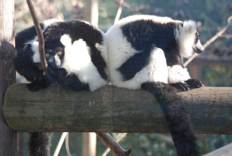Zoo Maia 434
